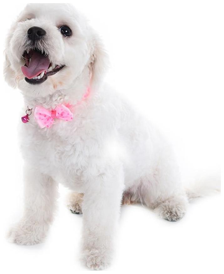 414b7044b Pets Empire Store | Buy Pets Empire Products online at best prices |  Paytmmall.com